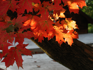 Great Hudson Valley Community Calendar and Bulletin Board - glorious fall